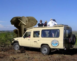 elephant safari savanne